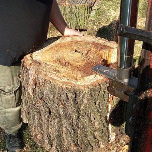 wycinka-drzew-czechowice-dziedzice-pszczyna-bestwina-kaniow-jaworzno-jasienica-1